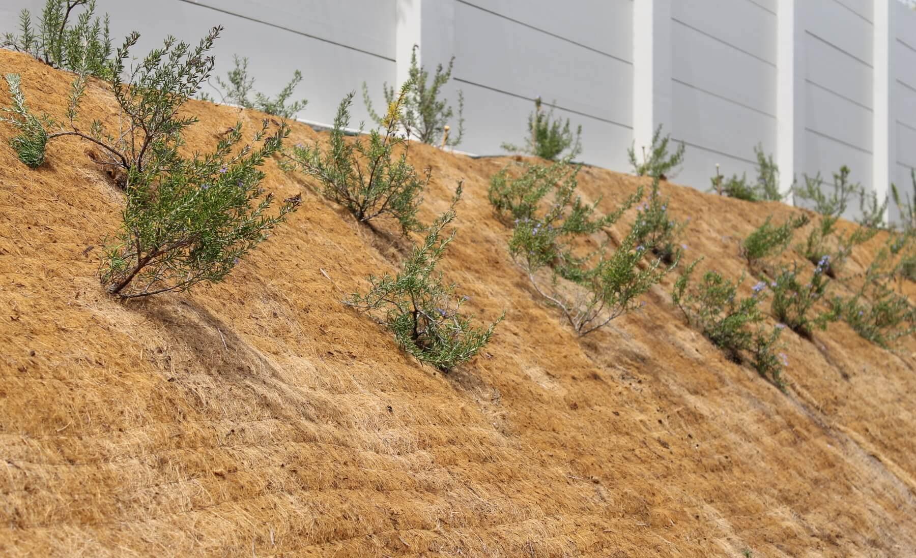 BioCoir Planting