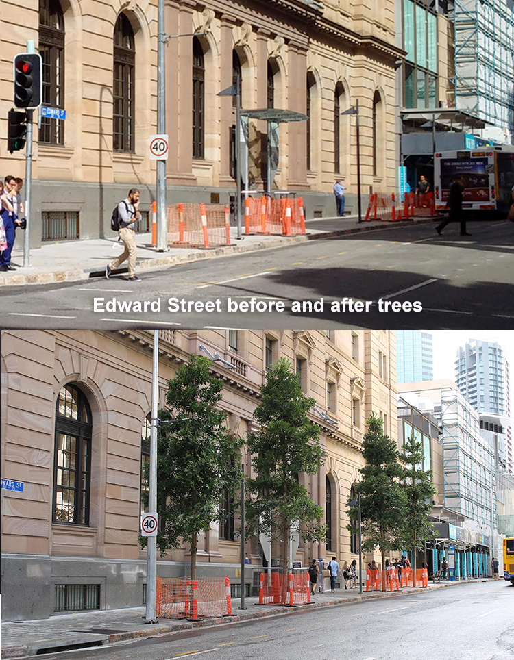 Edward st before-after trees